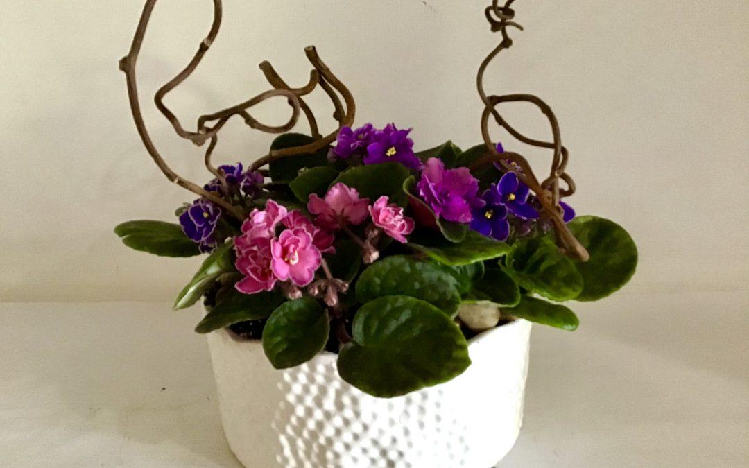 Mothers violets-1